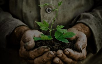 Old man hands holding a green young plant. Symbol of spring and ecology concept